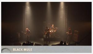 Black Mule